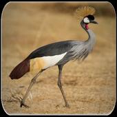Crane bird sounds icon