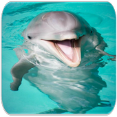 Dolphin sounds icon