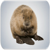 Sea Otter sounds icon