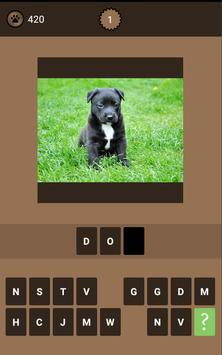 Animal Quiz poster