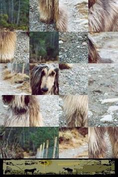 Dog Puzzle: Afghan Hound screenshot 2