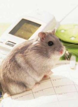 Mouse Puzzle apk screenshot