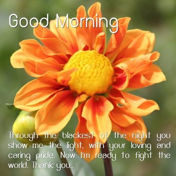 64+ Gambar Bunga Good Morning Terlihat Keren