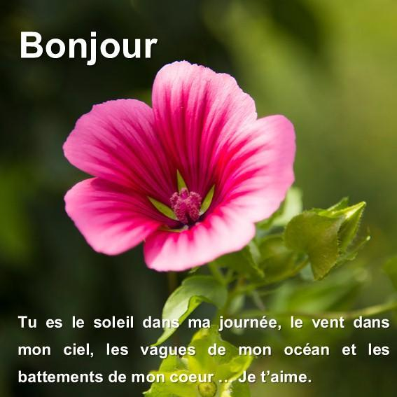 Sms Bonjour Mon Amour For Android Apk Download