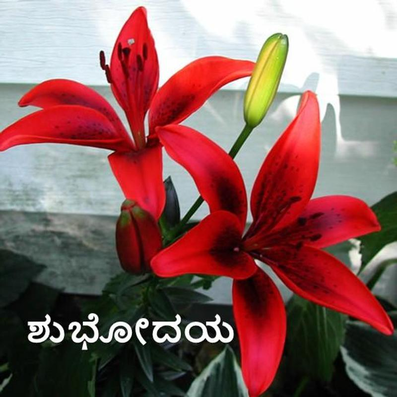 Morning Night In Kannada For Android Apk Download