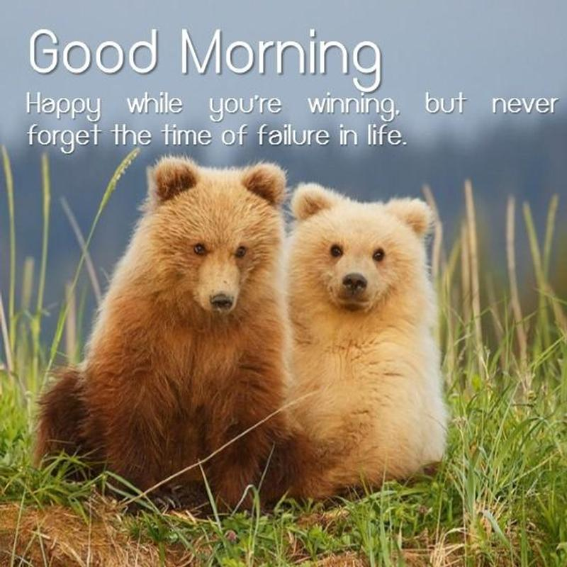 Good Morning Life Quotes For Android Apk Download