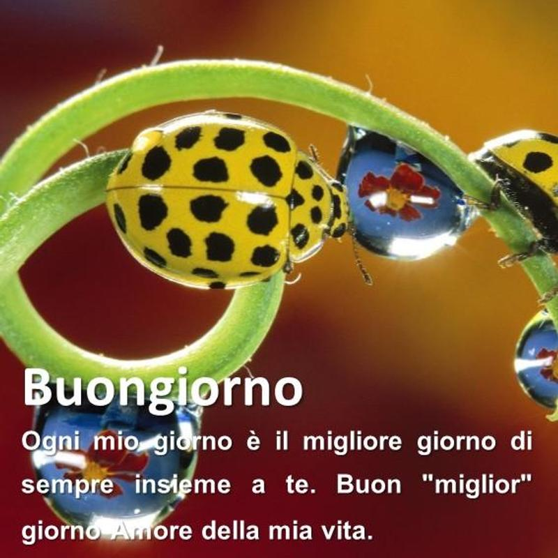Frasi Più Belle Per Dire Buongiorno For Android Apk Download