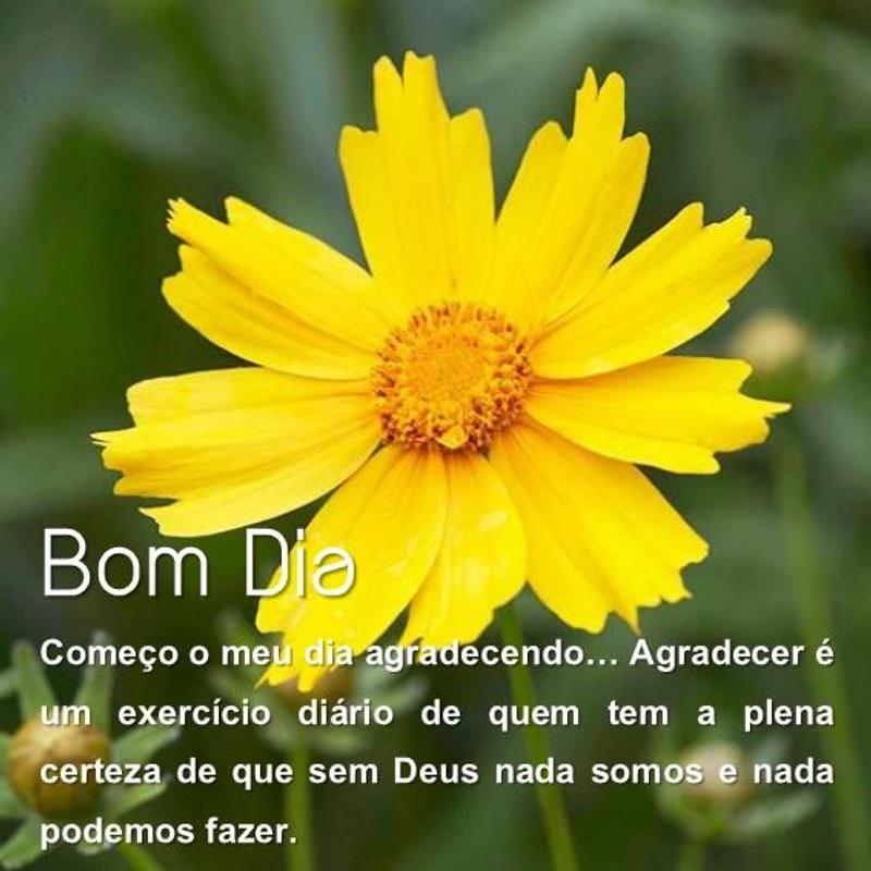 Good Morning Flower In Portuguese For Android Apk Download