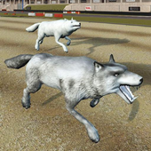 Wild Wolf Racing Game icon