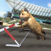 Crazy Cat Racing icon