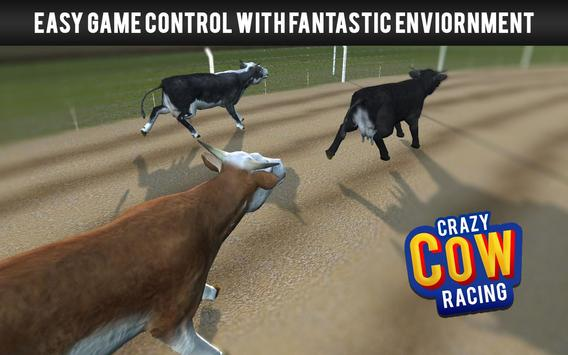 Crazy Cow Racing poster