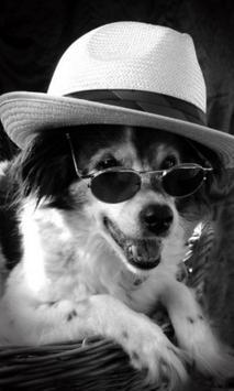 Cool dog Live Wallpaper screenshot 2