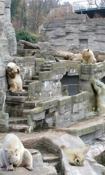 Hide and Seek Bears LWP apk screenshot