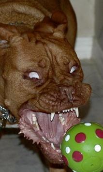 Psycho dog Live Wallpaper apk screenshot
