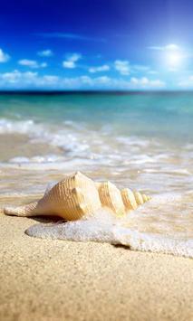 seashells live wallpaper poster