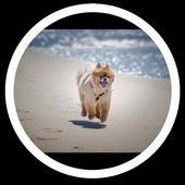 Dog Beach Live Wallpaper icon