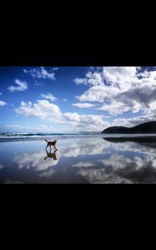 Dog Beach Live Wallpaper screenshot 4