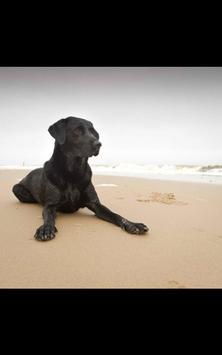 Dog Beach Live Wallpaper screenshot 5