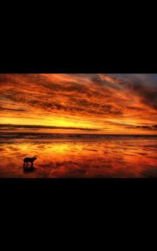 Dog Beach Live Wallpaper screenshot 6