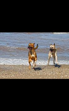 Dog Beach Live Wallpaper screenshot 7