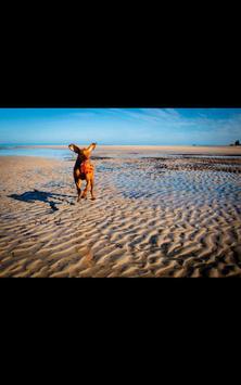 Dog Beach Live Wallpaper screenshot 8