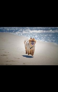 Dog Beach Live Wallpaper poster