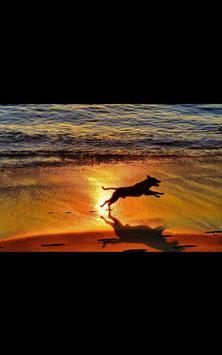 Dog Beach Live Wallpaper screenshot 1