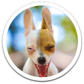 Funny Dog Live Wallpaper icon