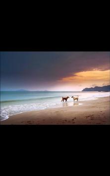 Dogs in Love Live Wallpaper apk screenshot