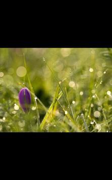 Holy Garden Live Wallpaper apk screenshot