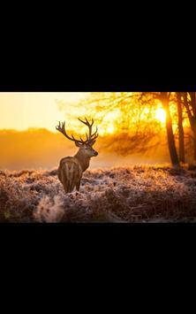 Forest Creature Live Wallpaper apk screenshot