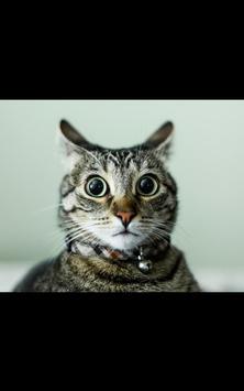 Funny Animals Live Wallpaper apk screenshot