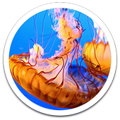 Photo Tentacles Live Wallpaper icon
