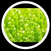 Spring Photos Live Wallpaper icon