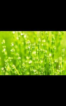 Spring Photos Live Wallpaper poster