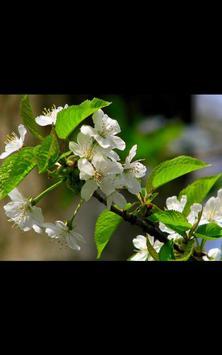 Spring Photos Live Wallpaper apk screenshot