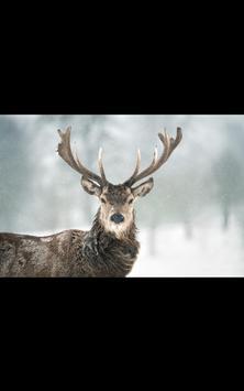 Yosemite Live Wallpaper apk screenshot
