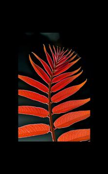 My Photo Wall Red Weed LWP apk screenshot