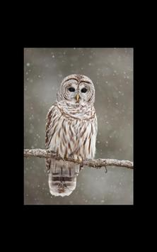 Photo HD Fairy Tale Snow LWP screenshot 4