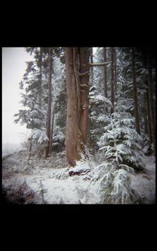 My HD Photos Snow Mountain LWP apk screenshot