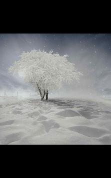 My Photo Wall Winter Trees LWP poster