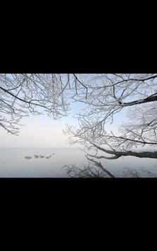 My Photo Wall Winter Trees LWP screenshot 7