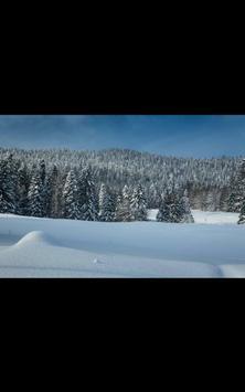 My Photo Wall Winter Trees LWP screenshot 4