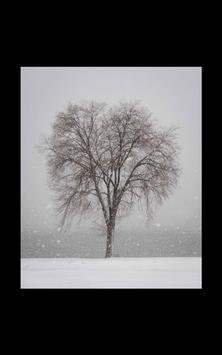 My Photo Wall Winter Trees LWP screenshot 5