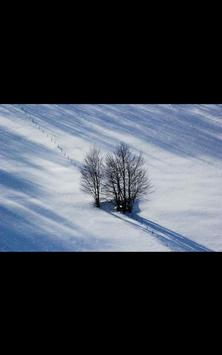 My Photo Wall Winter Trees LWP screenshot 6