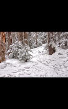 My Photo Wall Winter Trees LWP screenshot 9