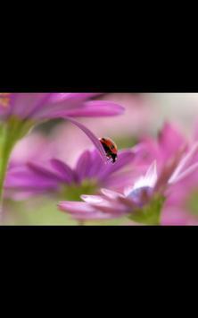 Photo HD Spring Flowers LWP apk screenshot