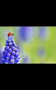 HD Photo Spring At Last LWP apk screenshot