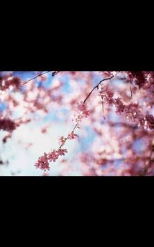 HD Photo Spring Blossom LWP poster