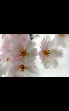 HD Photo Spring Blossom LWP screenshot 1